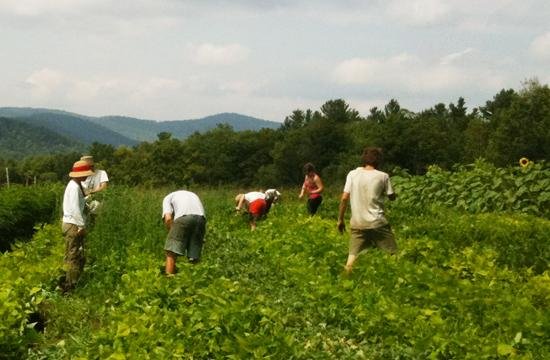Members of the Community Supported Agriculture (CSA) at Fable's Farm in Bernard