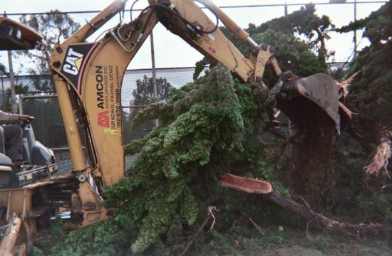 A bulldozer removes a tree line at Reed Park.