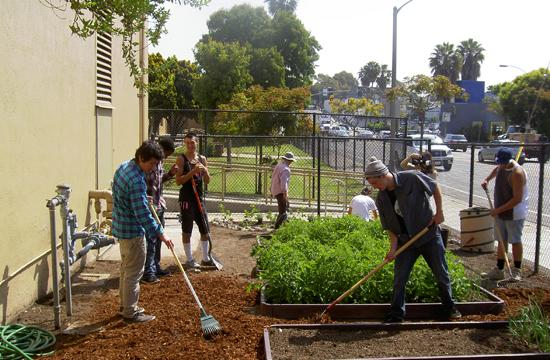 Students working in the vegtable garden at Olympic High School on Ocean Park Boulevard. The garden is visible to the public from the sidewalk.