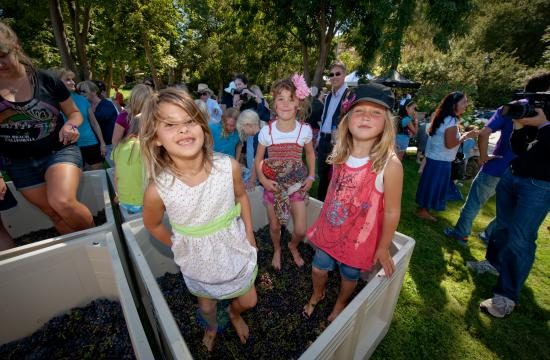 Three young girls participate in the Barefoot Grape Crush at the Malibu Family Wines Grape Crush last year.