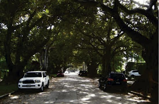The Draft Master Plan includes a street-by-street list of current trees and respective replacements as well as Santa Monica's tree-planting history. Pictured is La Mesa Drive in Santa Monica.