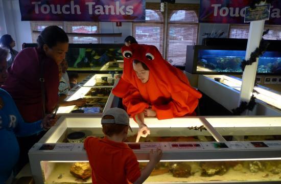 The 2010 Halloween and Dia de los Muertos event held at the Santa Monica Pier Aquarium.