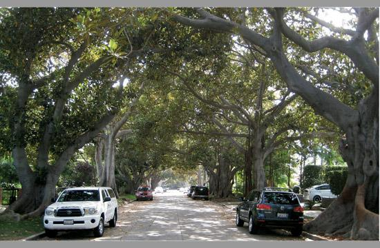 The Urban Forest Master Plan was approved by council members on Tuesday.