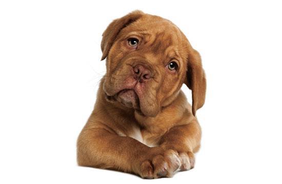 The 2012 Pet Emergency Preparedness Fair is this Saturday