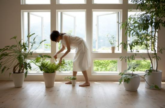 Adding a plant to your window can also combat indoor pollution and boost your creativity.