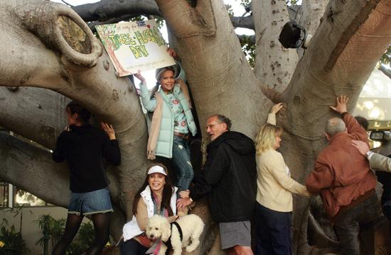 "About 15 people gathered around the Moreton Bay Fig Tree in the courtyard of the Fairmont Miramar Hotel on Monday as part of ""Tree Hugging Day."""