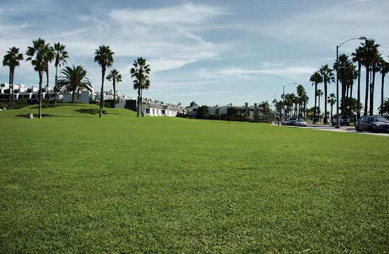 The Urban Forest Task Force has been re-established to ensure the Urban Forest Master Plan is properly executed.