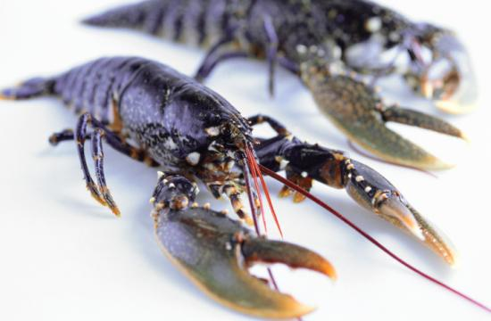 Two men were arrested in Santa Monica after police officers found them in possession of 10 live lobsters that had been illegally caught.