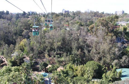 Enjoy a bird's-eye view of San Diego Zoo