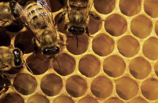 Honey contains the vitamins and minerals that are lacking in refined table sugar
