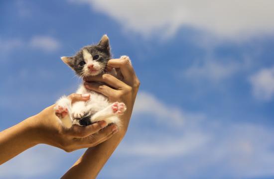 The Santa Monica Public Library presents an Animal Rescue Information Fair this Saturday