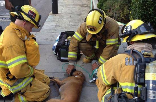 Santa Monica firefighters revive a dog they rescued from a burning apartment building at the corner of 2nd and Hill Street on Saturday.