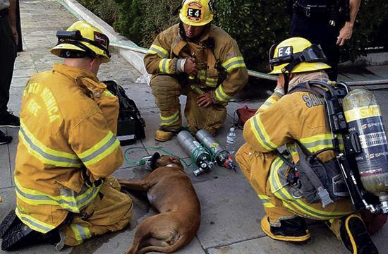 Santa Monica firefighters revive Stella using a special oxygen mask.