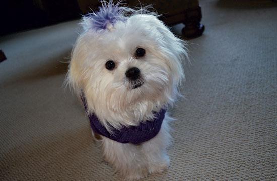 Barbara Bishop's rescue dog
