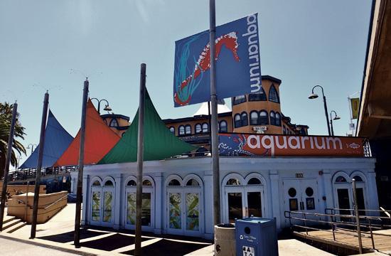 The Santa Monica Pier Aquarium is Heal the Bay's public marine-education center located beach-level