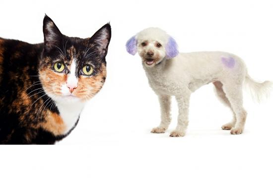 Adoption pets of the week from NKLA Pet Adoption Center in West LA: Carly and Lindsey.
