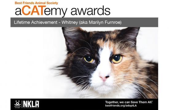 aCATemy awards WINNER/LIFETIME ACHIEVEMENT - Whitney (aka Marilyn FURnroe).