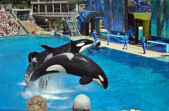Assemblymember Richard Bloom will today unveil a landmark Orca Welfare and Safety Act that takes aim at Sea World San Diego's Shamu show.