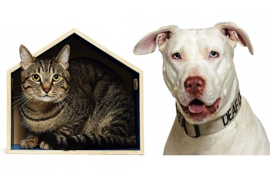 The NKLA Pet Adoption Center in West LA has plenty of loving cats and dogs needing new homes