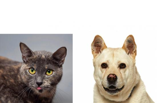 Both Califa (left) and Kiley are available to bring home today from the NKLA Pet Adoption Center in West LA