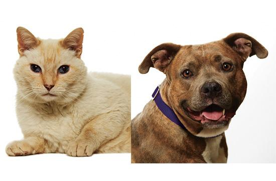 Here are this week's adoption pets of the week.