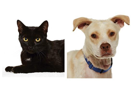 Adoption pets of the week - Jinx and Honey Bear.