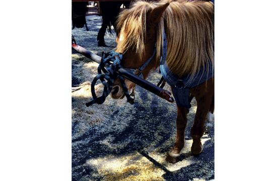 One of the ponies at the Santa Monica farmers market every Sunday.