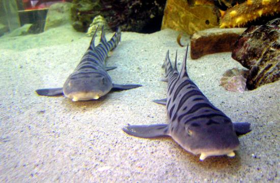 Get up close and personal with live sharks at the Santa Monica Pier Aquarium.
