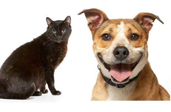 Adopt Thor and Ranger today at the NKLA Pet Adoption Center in West LA.