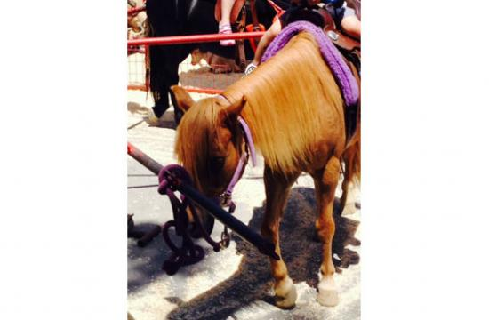 One of the ponies at the Santa Monica farmers market on Sundays at Main Street.