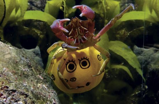 Pier Aquarium To Go Spooky