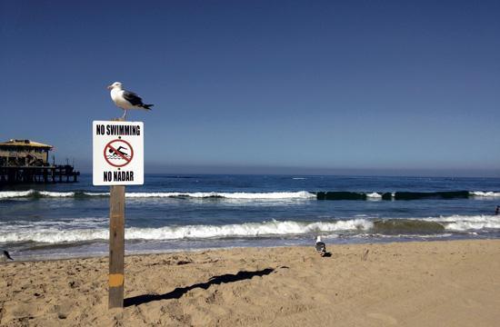Latest high surf news.