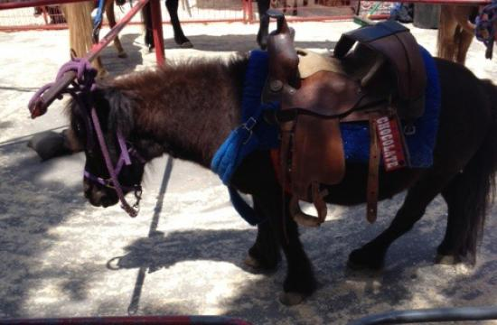 One of the ponies at the Main Street Farmers Market in Santa Monica.