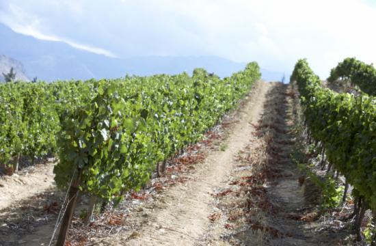 L.A. County Supervisors have imposed a temporary ban on new or expanded vineyards a large swath of the northern Santa Monica Mountains.