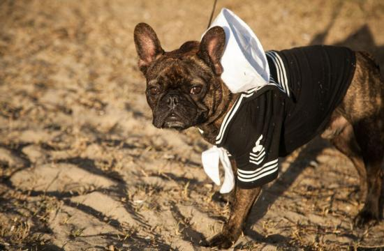 Puppy dogs will be strutting their paws along Ocean Front Walk dressed in their best Halloween attire today.