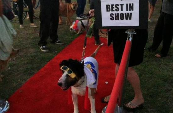 It was the best on show at this year's Dog-O-Ween at Venice Beach. Watch the the mutts of Dogtown strut their stuff on the red carpet