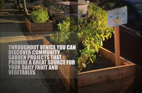 Throughout Venice you can discover community garden projects that provide a great source for your daily fruit and vegetables.