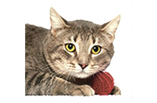 Buster is a 2-year-old gentle fellow who is oh-so-mellow. Looking for a calming friend to enjoy the finer moments in life with? Adopt Buster today!