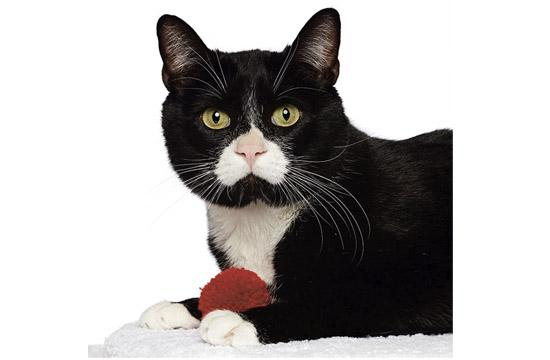 OREO: We can't get enough of sweet Oreo, and we think you won't be able to either. Oreo is an adorable, 4-year-old male cat who wants to be in your lap of luxury! And he'll reward you by giving you his heart every day (do you see his upside-down heart on his face?). Adopt Oreo today.