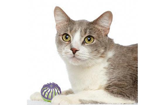 Sasha: Meet Sasha! She is a gorgeous 2-year-old cat who is so sweet and friendly. She loves to play and gets along with other cats, too. Adopt Sasha today and enjoy a lifetime of love together!