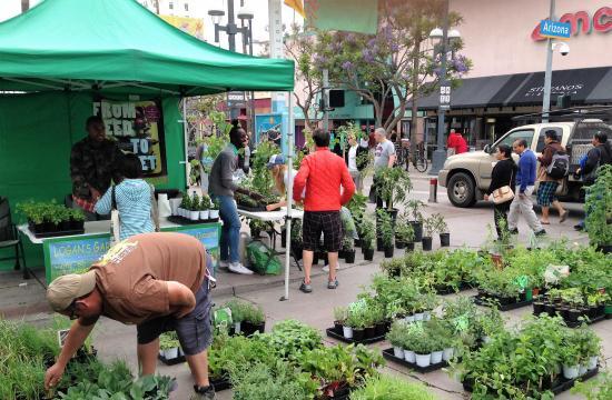 Downtown Farmers Markets