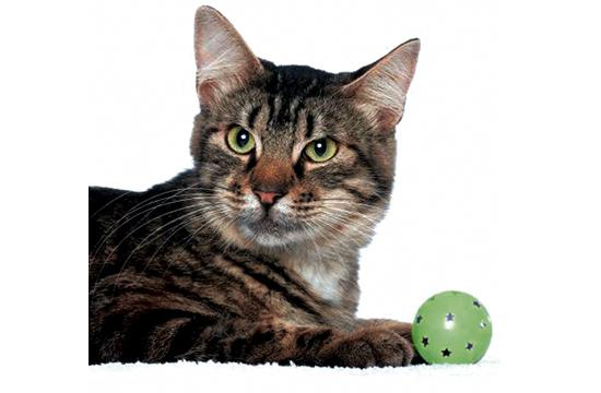 "SOPHIA: Sweet Sophia is a gentle and playful girl. Her playful personality shines when she has visitors at the center! Sophia has an outgoing personality and will reach out to you with her little paws as if to say ""hug me!"" Sophia is also a smart cat—she loves to play interactive app games. Very playful personality. Enjoys wand toys and interactive app games. Adopt Sophia today for just $9 during our ""9 Lives"" promotion and you'll have a lifelong friend!"