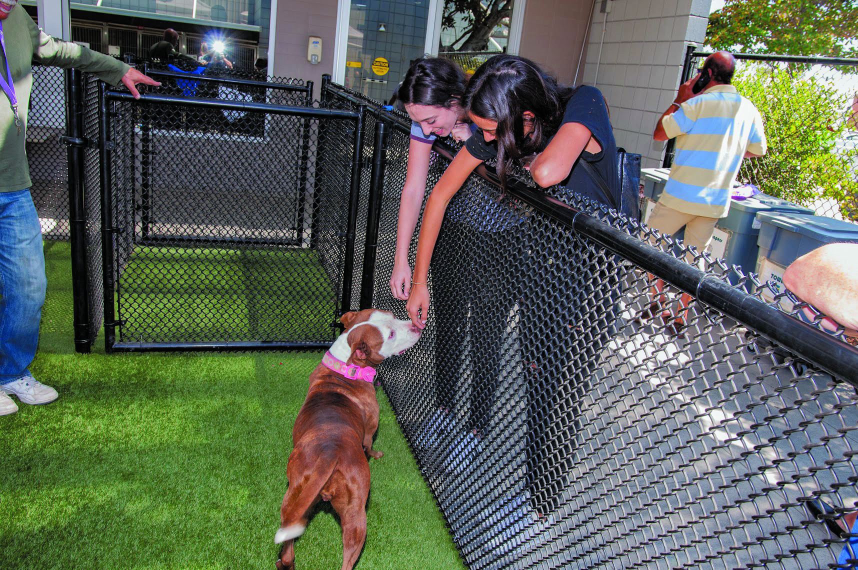 Clear the Shelter Campaign in Santa Monica